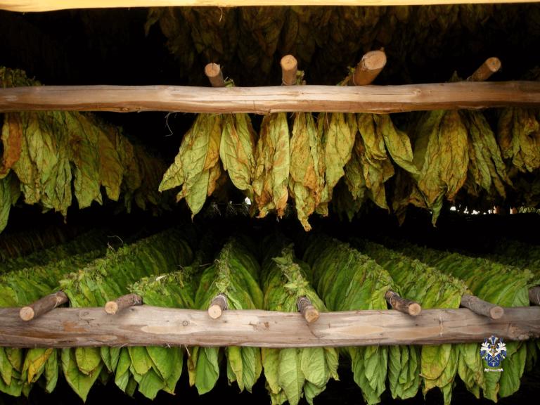 Cuban Sigaret Leaves